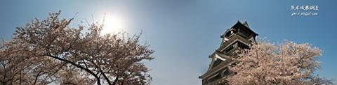 熊本城桜05panoDPR