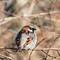Sparrow IMG_0125