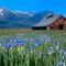 koch ranch iris