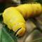 16-09-07 P1870960 yellow cat1