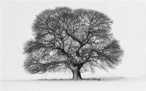 Sid Jones 01 Winter Tree