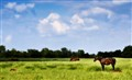 Equine Field