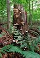 wood shrooms