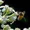 Bee 2 091912