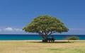 Poipu, Kauai