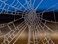 Iced web