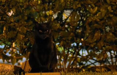 Black Cat by Night - (no flash)