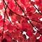 Fabrics of Fall