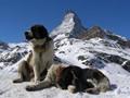 Matterhorn and St Bernhard's