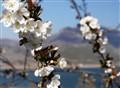 Spring in the lake