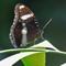 eggfly