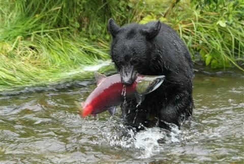 bears1 044 - Copy