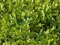 Aruba's Green Side