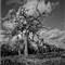 Tree. 03