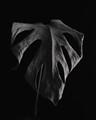 Elephant_leaf_mask