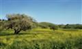 Santa Ynez Springtime