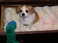 Tater Tot in a Drawer