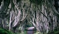 The Mysterious Dark Hedges in Northern Ireland