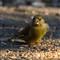 bird-garden-1-apr-02