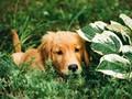 Puppy hiding in bushes