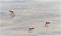 Headless flamingos