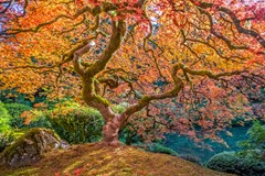 Iconic Tree