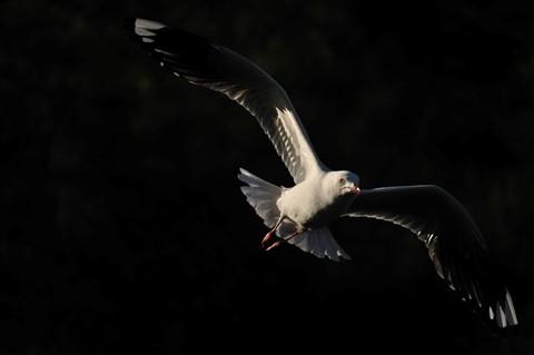 dp Seagull2_01