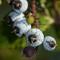 Garden macros 20130903 0012