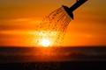 Watering Sunset