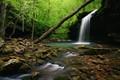 Swamp Falls