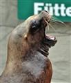 Viennese Seal