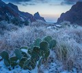 anomaly - cactus in snow-2