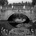 Water lilies pond brige BW