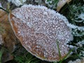 ice on a leaf
