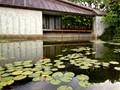Thurston Memorial Chapel/Punahou Lily Pond