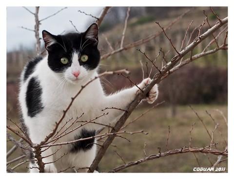 catDSCF4015