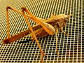 A grasshopper on the mesh of my window