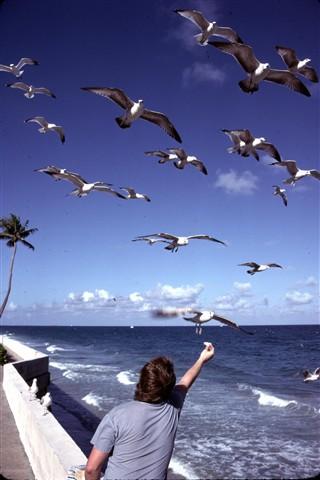 For the Birds (south Florida)