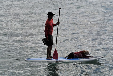 Surfer Dog (on the way out)