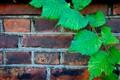 Green and bricks