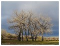 Sandstone Ranch Winter Trees