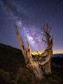 Milky Way Rising Over Bristlecone Pine