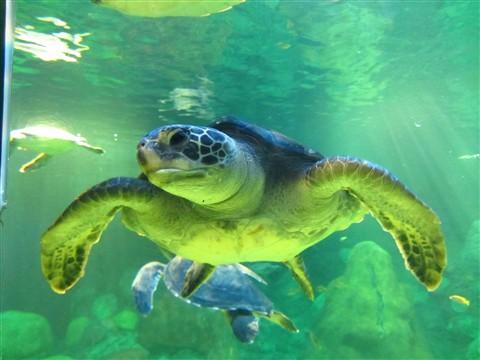 Sea Turtle 2