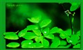 simply_green