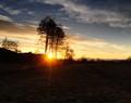 sunrise behind the trees