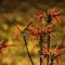 Aloe-Flowers-Web