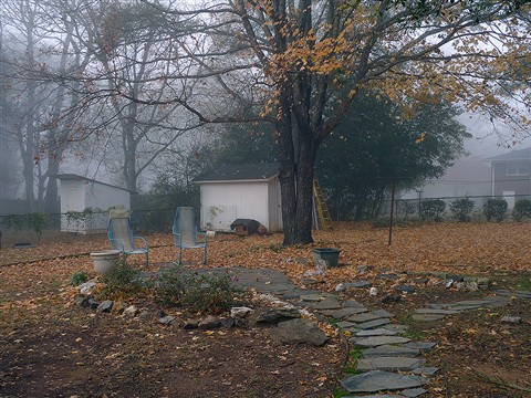maple in fog