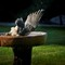 Dunk Hawk