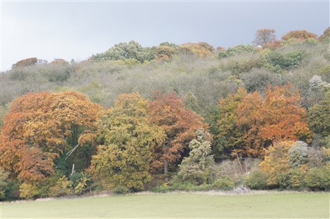 Ashridge 2 Oct11