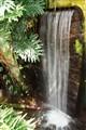 Inside Niagara Falls Butterfly Conservatory